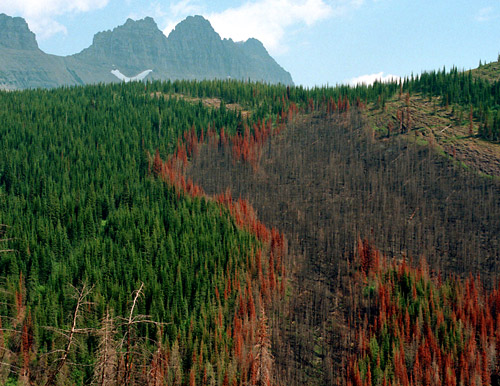 Forest Fire Patterns